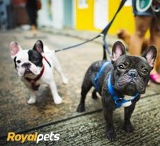 15% de desconto em todo site da Royal Pets